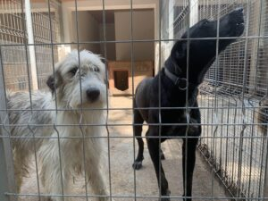 Hunde in Ungarn IMG_0558