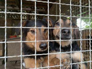 Hunde in Ungarn IMG_0587