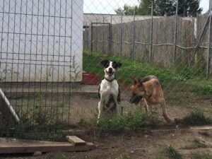 Hunde in Ungarn IMG_2524