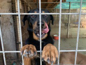 Hunde in Ungarn IMG_2601