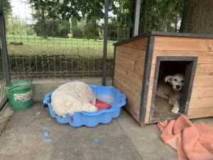Hunde in Ungarn IMG_2724