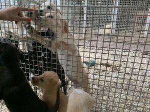 Hunde in Ungarn IMG_2765