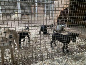 Hunde in Ungarn IMG_2773