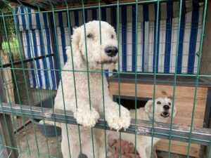 Hunde in Ungarn IMG_2890
