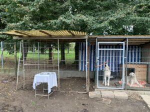 Hunde in Ungarn IMG_2934