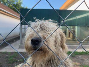 Hunde in Ungarn IMG_2976