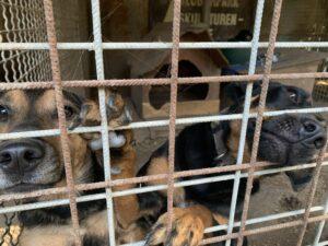 Hunde in Ungarn IMG_3002