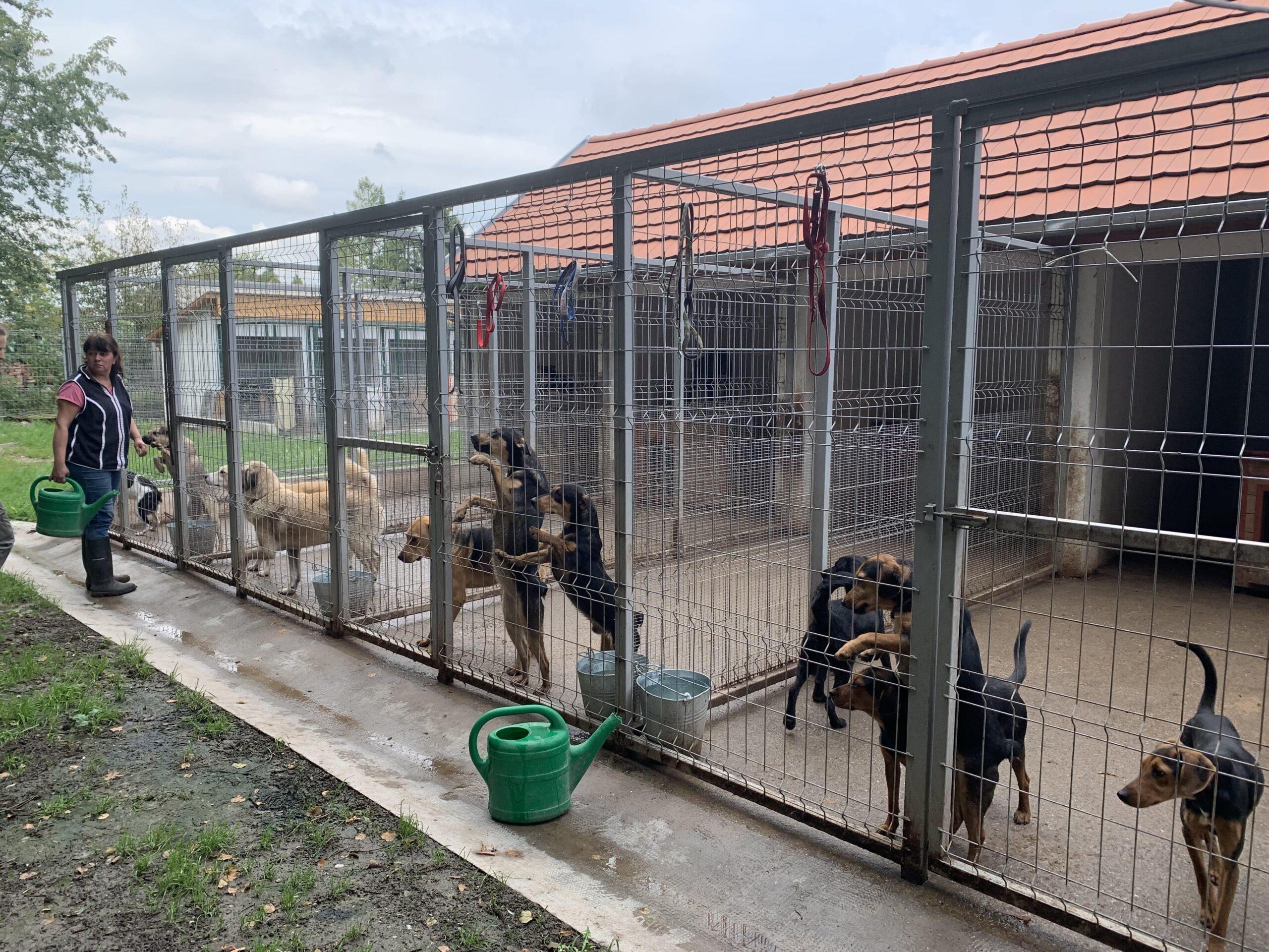Hunde in Ungarn IMG_3118